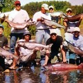 12 kings before lunch - Alaska, June 2005