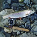 Fly rod rainbow - Lake Creek, Alaska