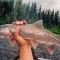 Lake Creek native rainbow trout