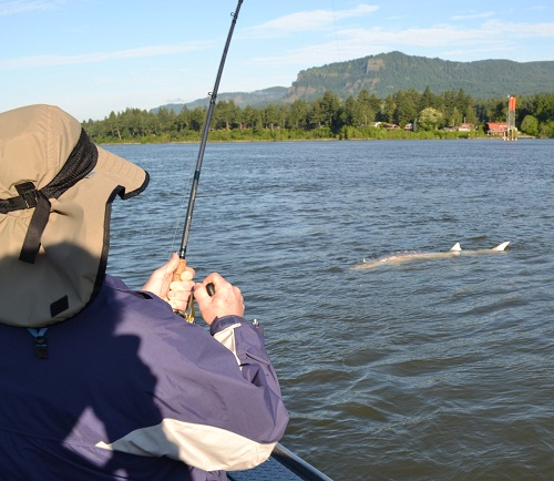 Sturgeon photos sky 39 s guide pacific northwest oregon for Fishing columbia river