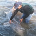Columbia River Oversize Sturgeon Guided Fishing