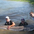 Columbia River guided oversize sturgeon fishing - Aug 2011