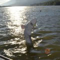 Columbia River sturgeon - June 2011