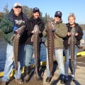 Alan Delashmutt Construction LLC with a limit of sturgeon, Oregon City - Oct 2013