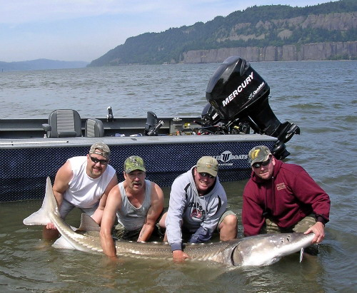 Sturgeon fishing sky 39 s guide pacific northwest for Fishing columbia river